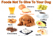 Foods That Should Not Be Given To Your Dogs
