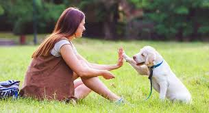 How To Train Your Puppy : Advice By Dog Trainer