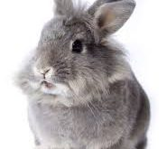 Pet-Rabbit Biography – What Is Domesticated Rabbits? How To Take Care For Your Pet-Rabbit?