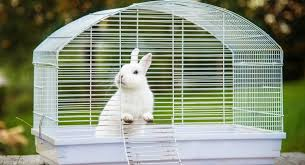 Rabbit Hutch Or Rabbit Cage? Picking Your Rabbit's Home