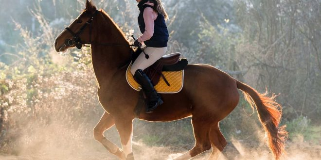 Handling Horses With Self-confidence – End Fearing and Start Experiencing Your Horse