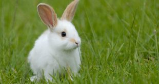 Rabbit Farming To Provide Rabbits For The Dog Industry