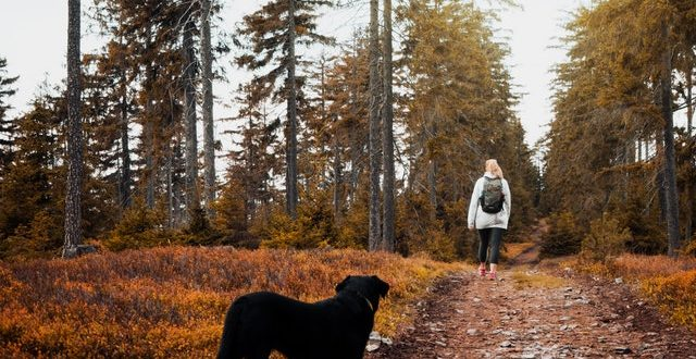 Dog woodlands – a great deal for you and also your pet dog